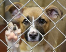 Things To know About Rescue Dogs
