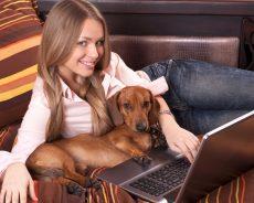 Finding Discount Pet Supplies Online