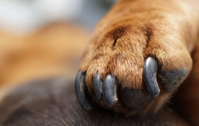 Things To Consider While Buying Dog Nail Grinders For The First Time