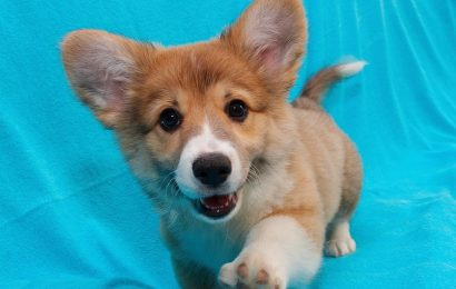 Choosing The Perfect Puppy For Your Kids