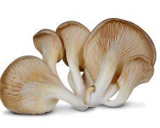 Magic Mushrooms – Where to Buy?