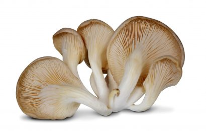 Magic Mushrooms – Where to Buy?