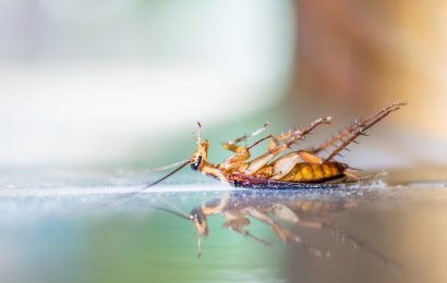 Initially You May Not Realize The Biting Of Bed Bugs But When They Spread On A Large Scale You May Experience Trouble In Sleeping