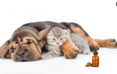Benefits Of Cbd Oil For Dogs With Arthritis