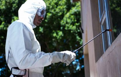 Professional Termite Control Services