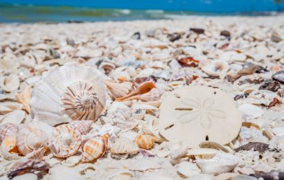 Visit Marco Island In Florida For The Most Exquisite Shells