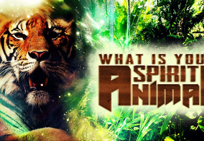 What Really Animal Spirit Is? Everything You Need To Know