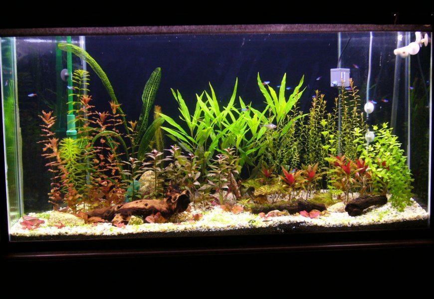 Here Is The Simple Guide On Constructing Aquatic Aquarium Plants